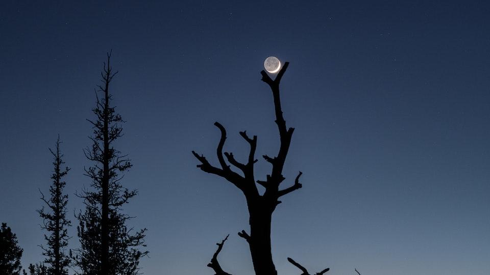 Recent Work - Moon Tree IV