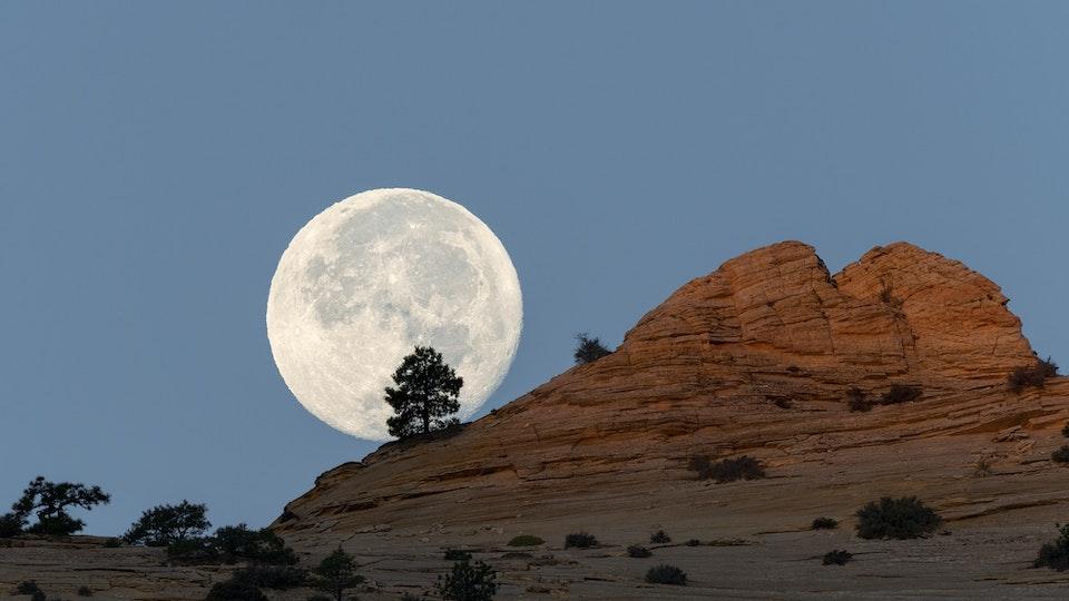 Landscapes - Moon Tree II