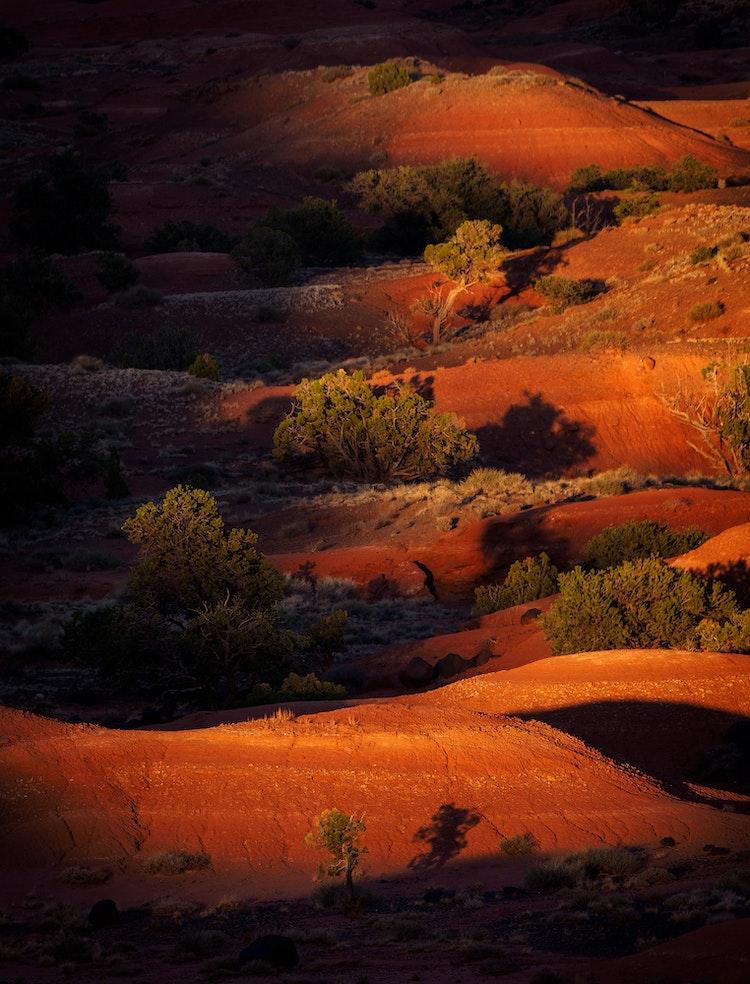 Desert-Light
