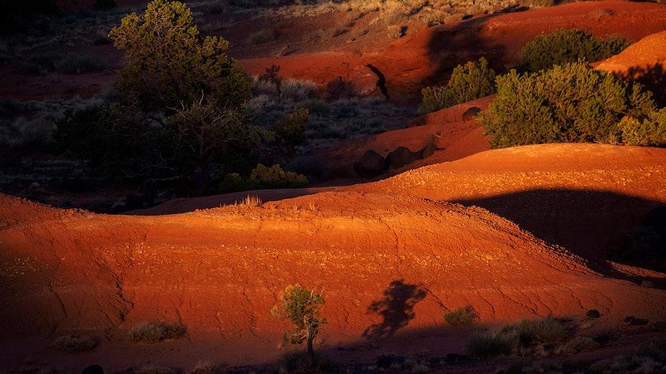 Recent Work - Desert Light