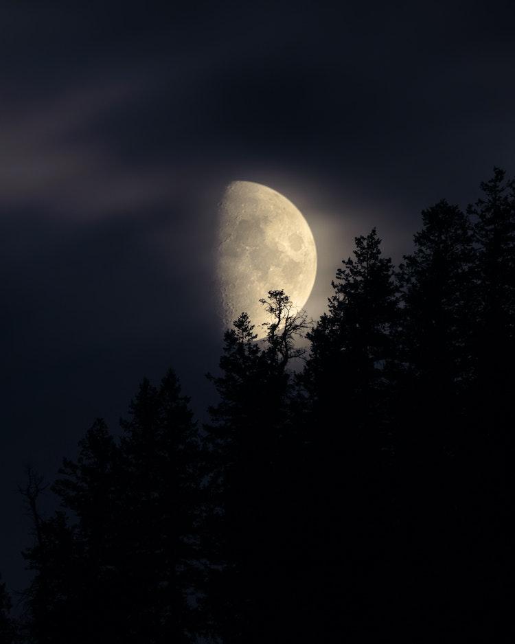 Moon-Tree-III