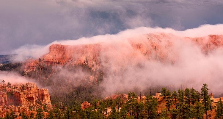 Foggy-Bryce