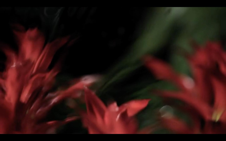 CHRIS O'DRISCOLL - Screen Shot 2020-11-05 at 12.20.04