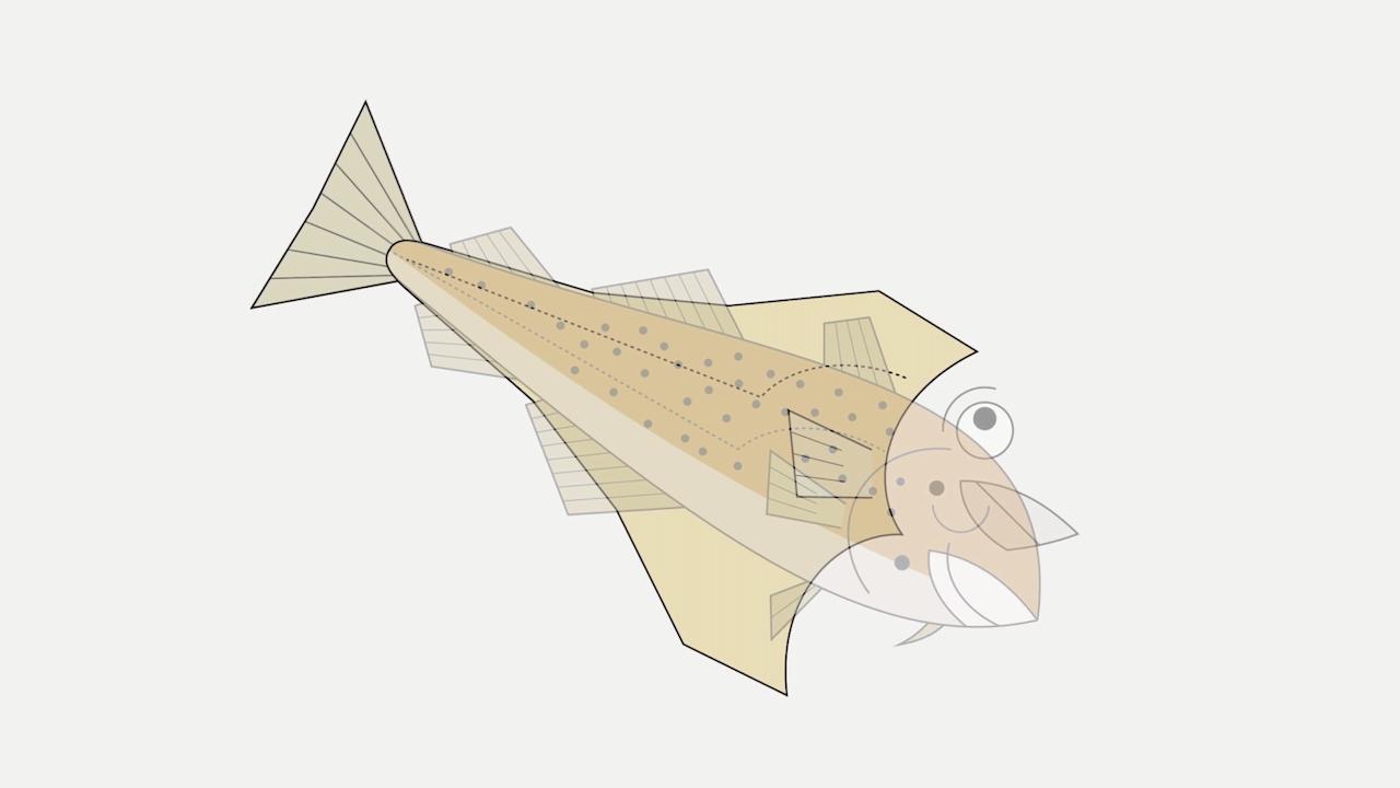 O peixe que perdeu a cabeça