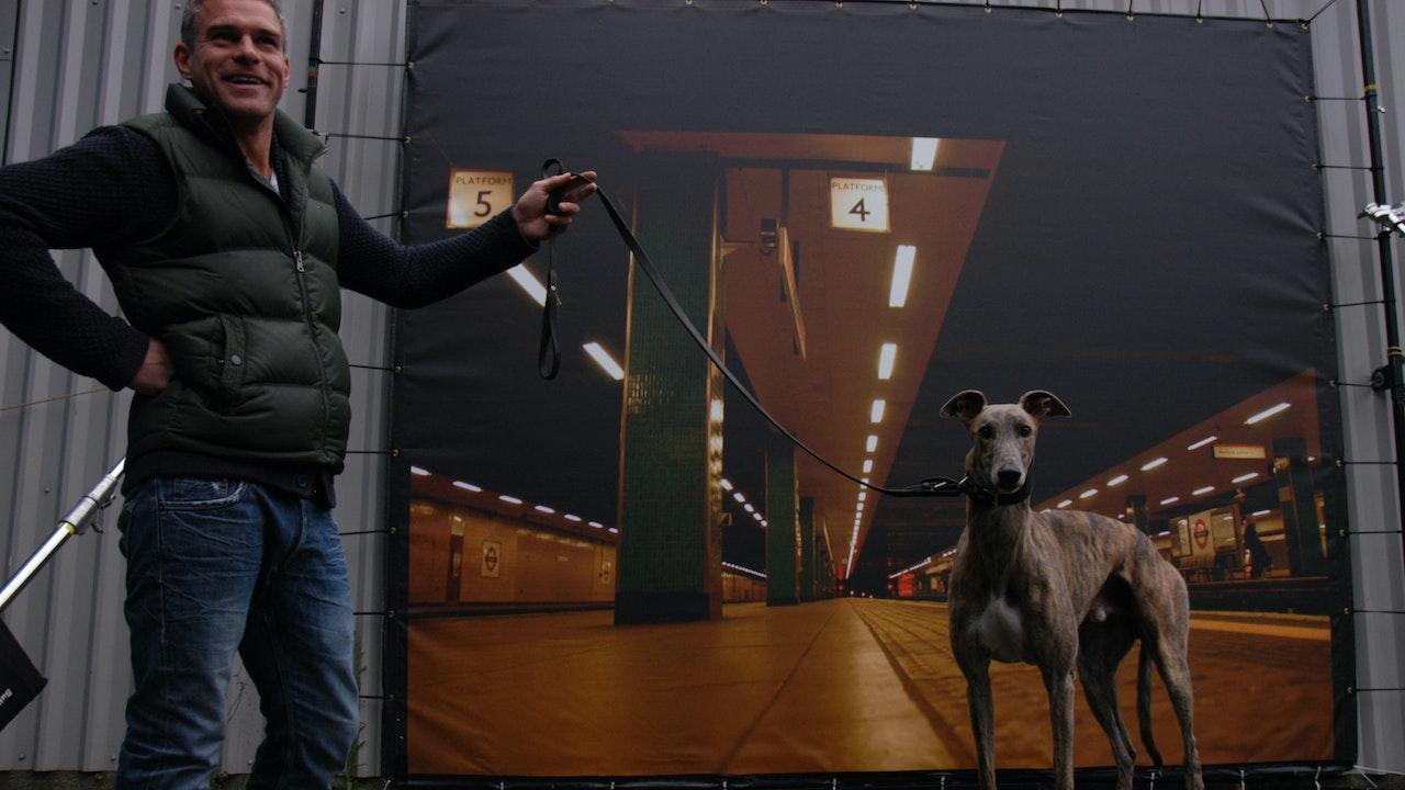 translites - secret life of dogs
