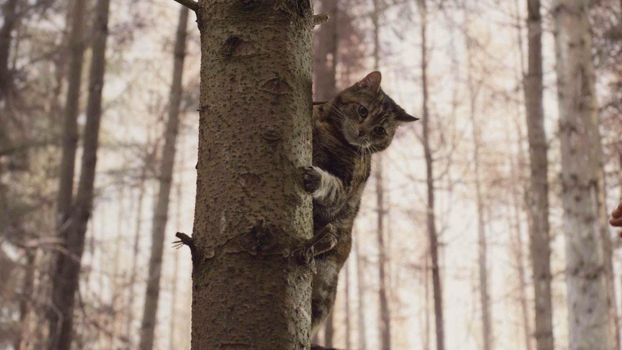 translites - secret life of cats