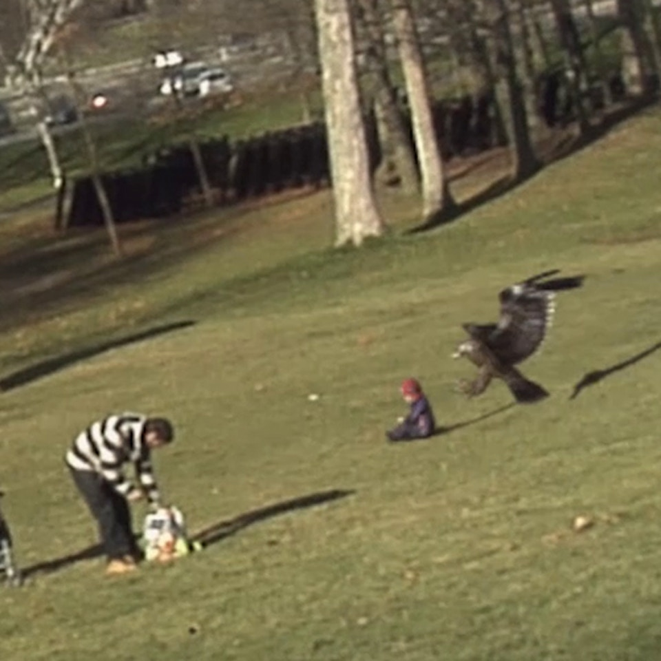 Golden Eagle Snatches Kid (2012)
