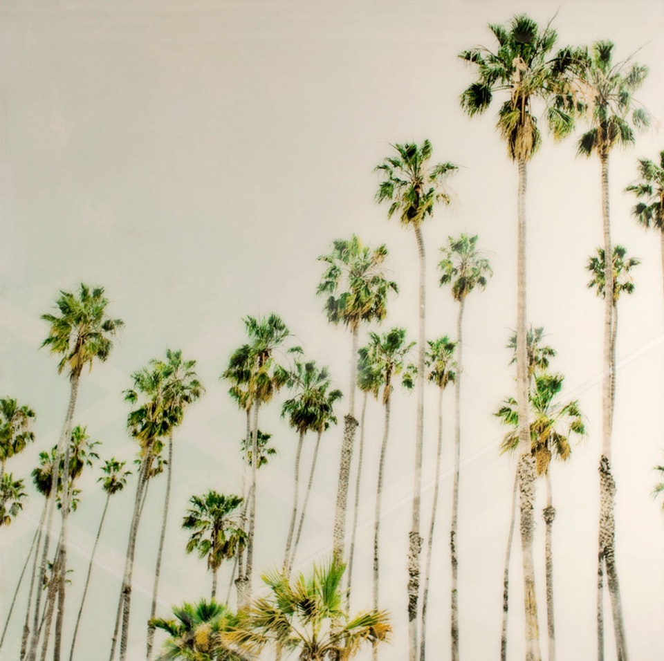 CHRISTINE FLYNN - PALM TREES #2 (sold)