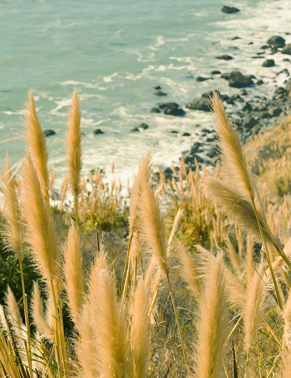 CHRISTINE FLYNN - BIG SUR PAMPAS