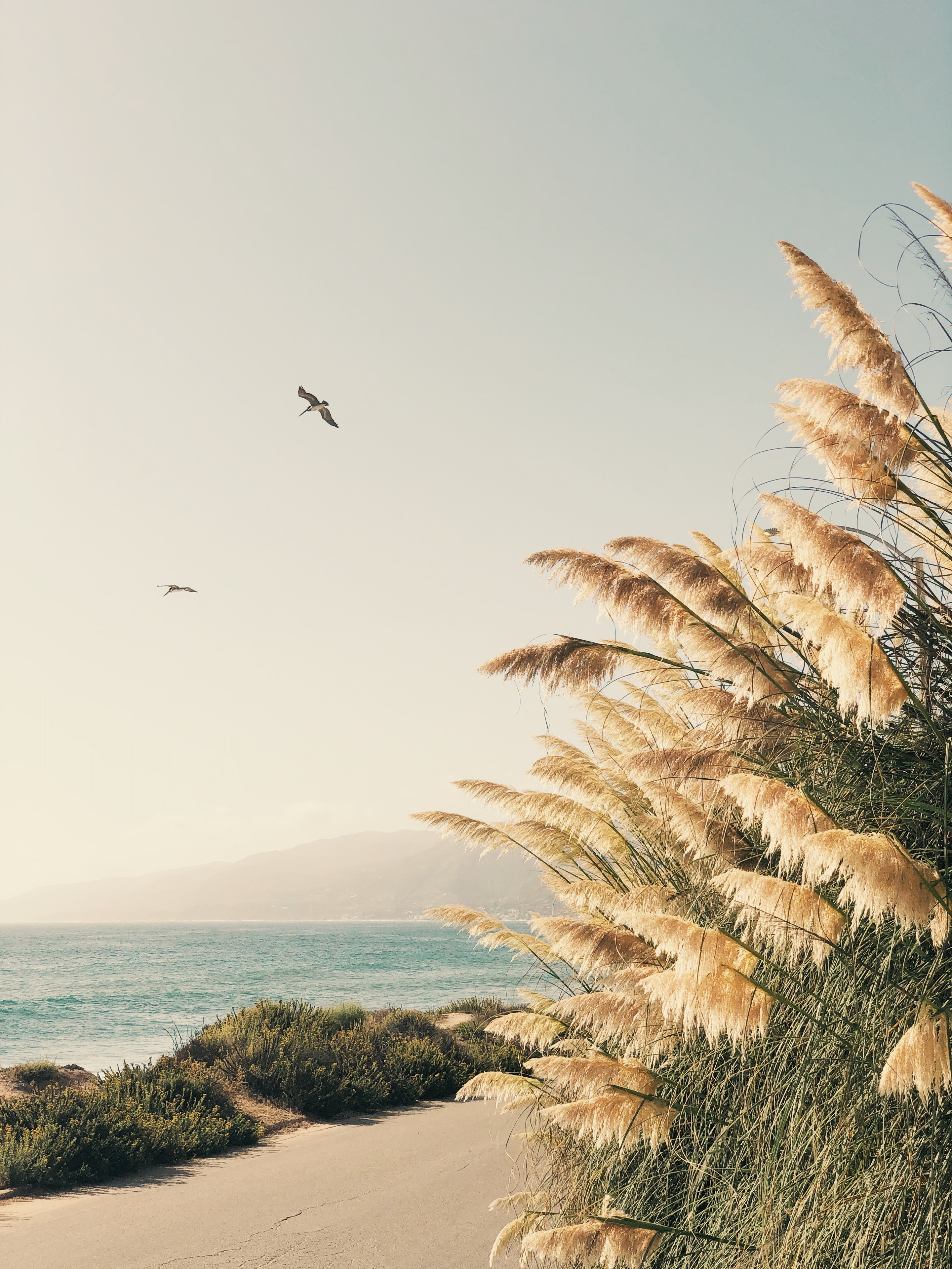 CHRISTINE FLYNN - CALI_PAMPAS