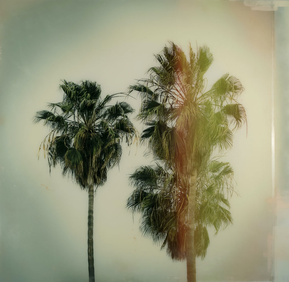 CHRISTINE FLYNN - CALIFORNIA PALMS