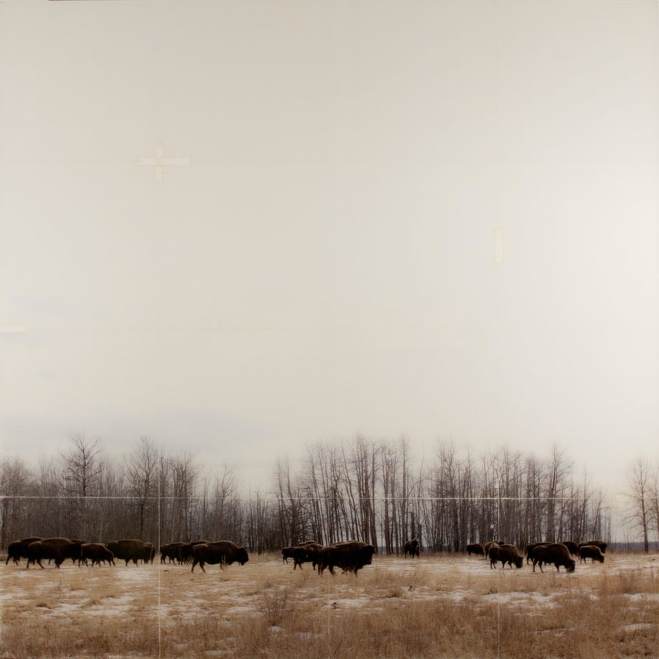 CHRISTINE FLYNN - BISON HERD (sold)