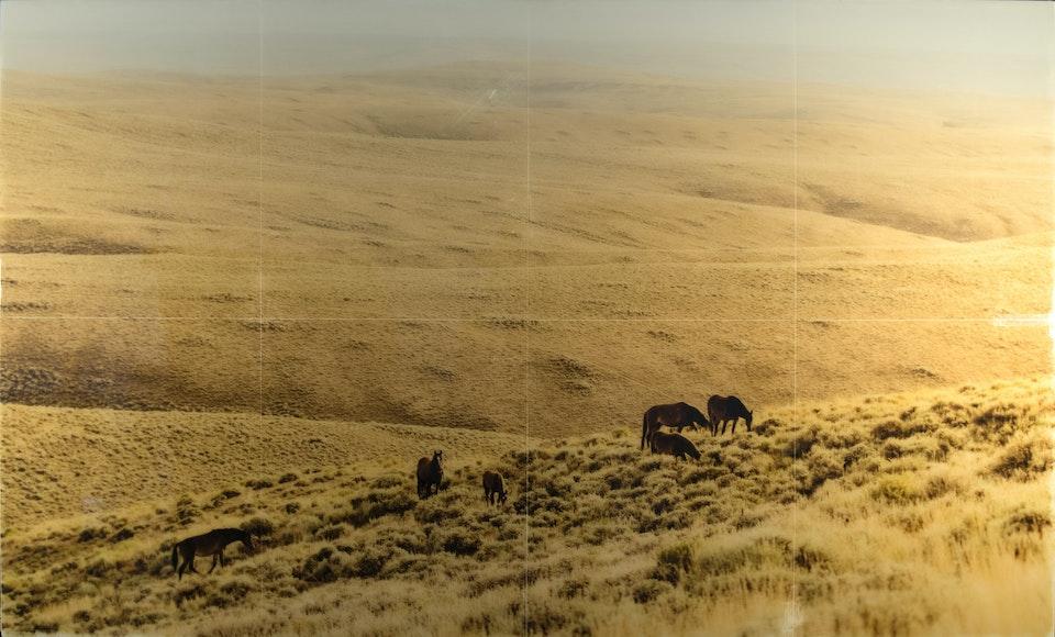 CHRISTINE FLYNN - WYOMING WILD HORSES