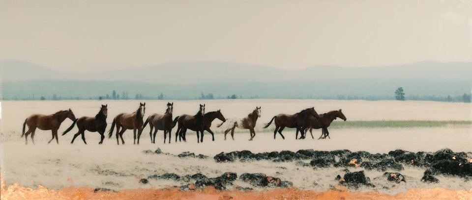 CHRISTINE FLYNN - WILD HORSES (sold)