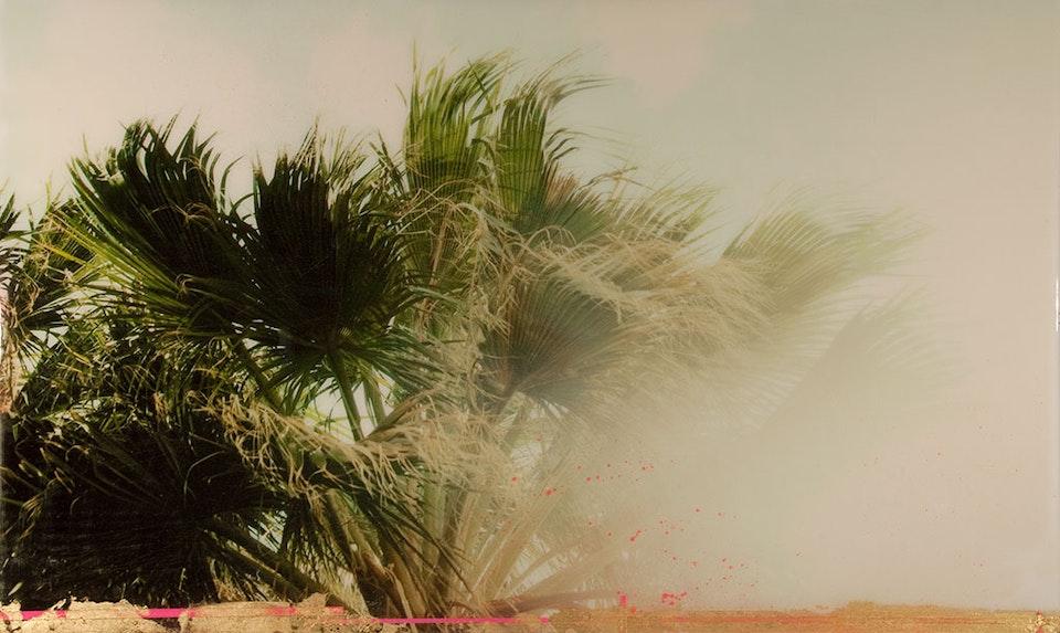 CHRISTINE FLYNN - PALM TREES (sold)