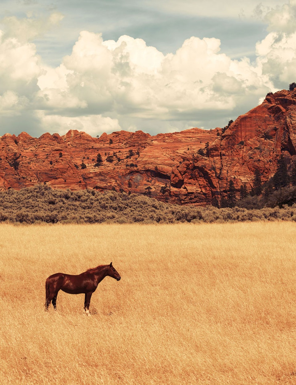 CHRISTINE FLYNN - NEVADA HORSE