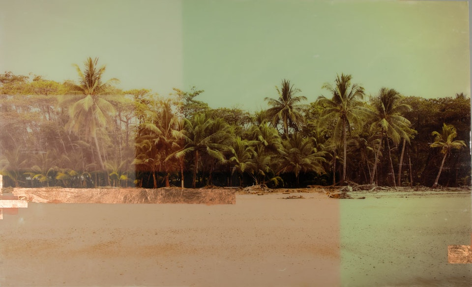 CHRISTINE FLYNN - COSTA RICA PALMS