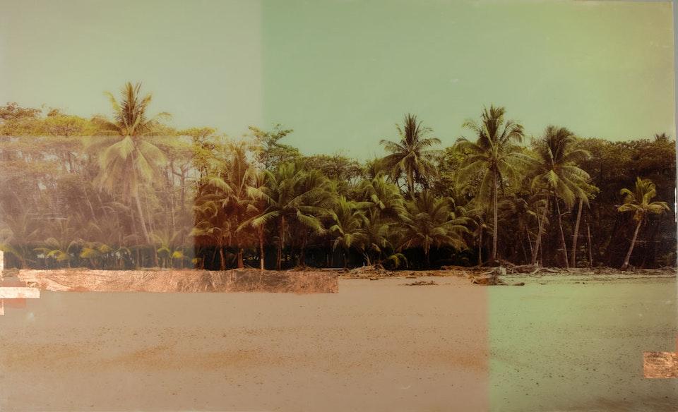 CHRISTINE FLYNN - COSTA RICA PALMS