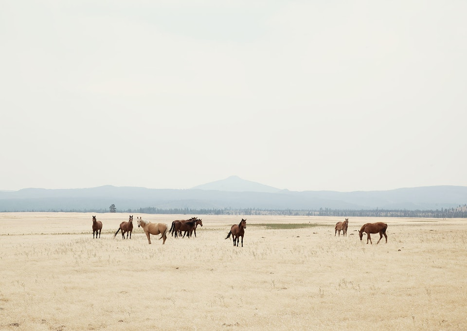 CHRISTINE FLYNN - WILD HORSES