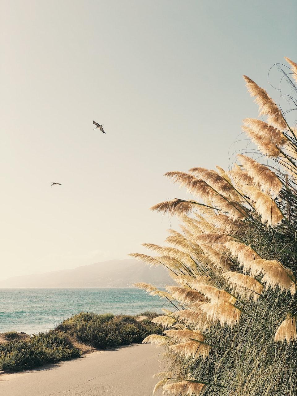 CHRISTINE FLYNN - PAMPAS
