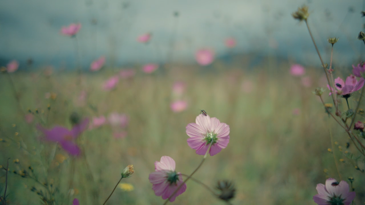 """""""Muerte Es Vida"""" Feature Documentary -"""