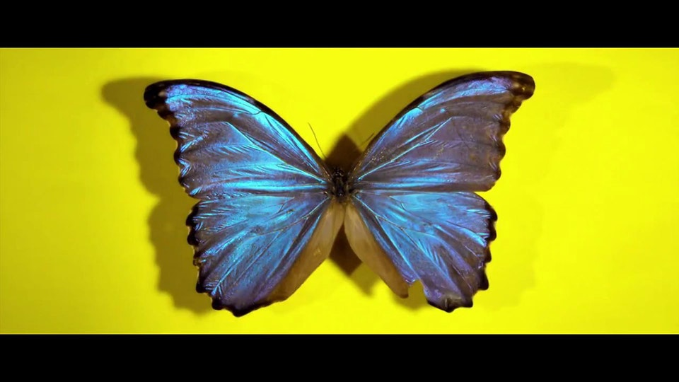 "U2 & Damien Hirst  ""Real Thing"" Video Walls for Glastonbury"