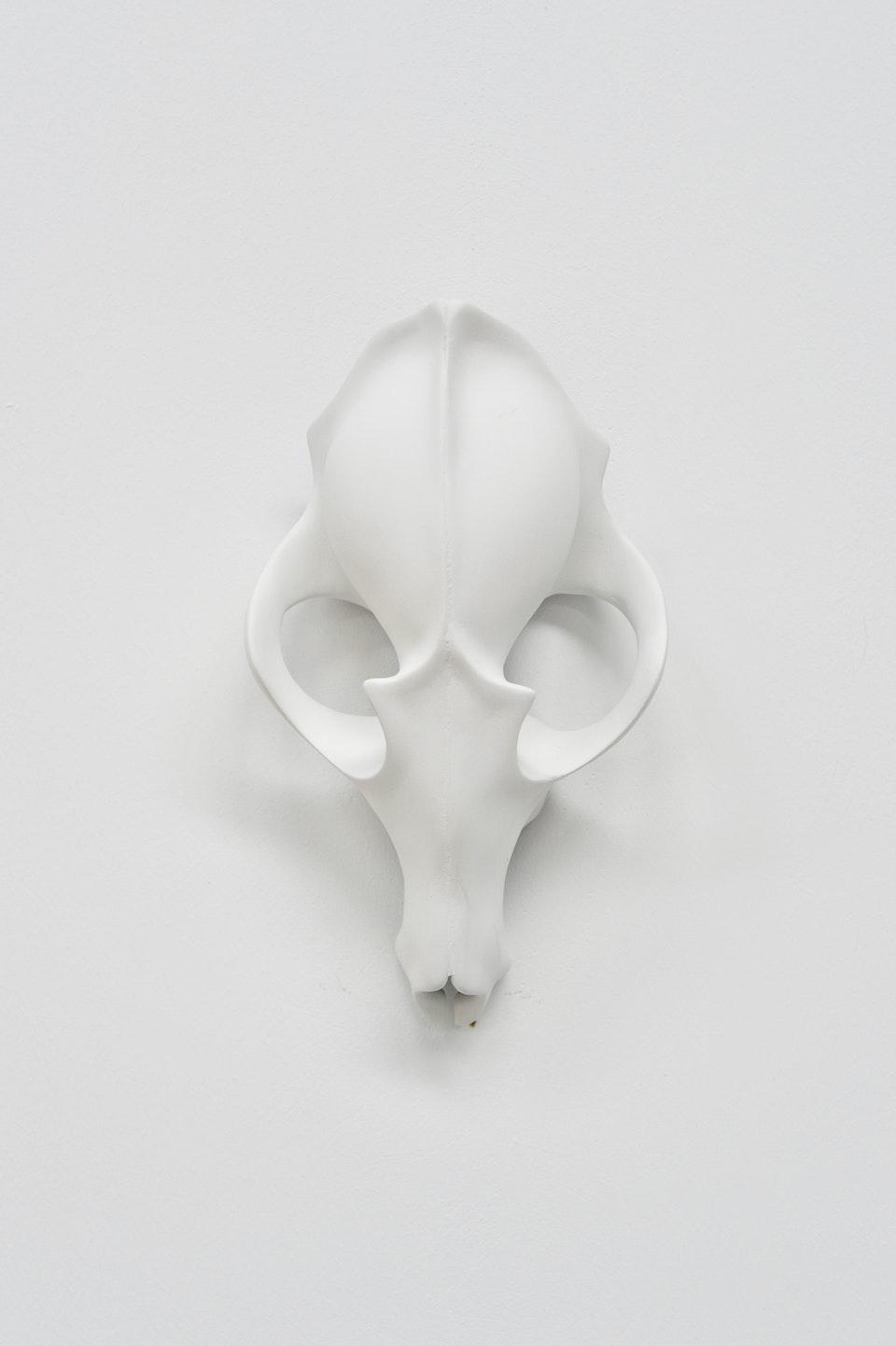White Fox Skull 0107525E-38F2-450D-B11F-6A37D5765755
