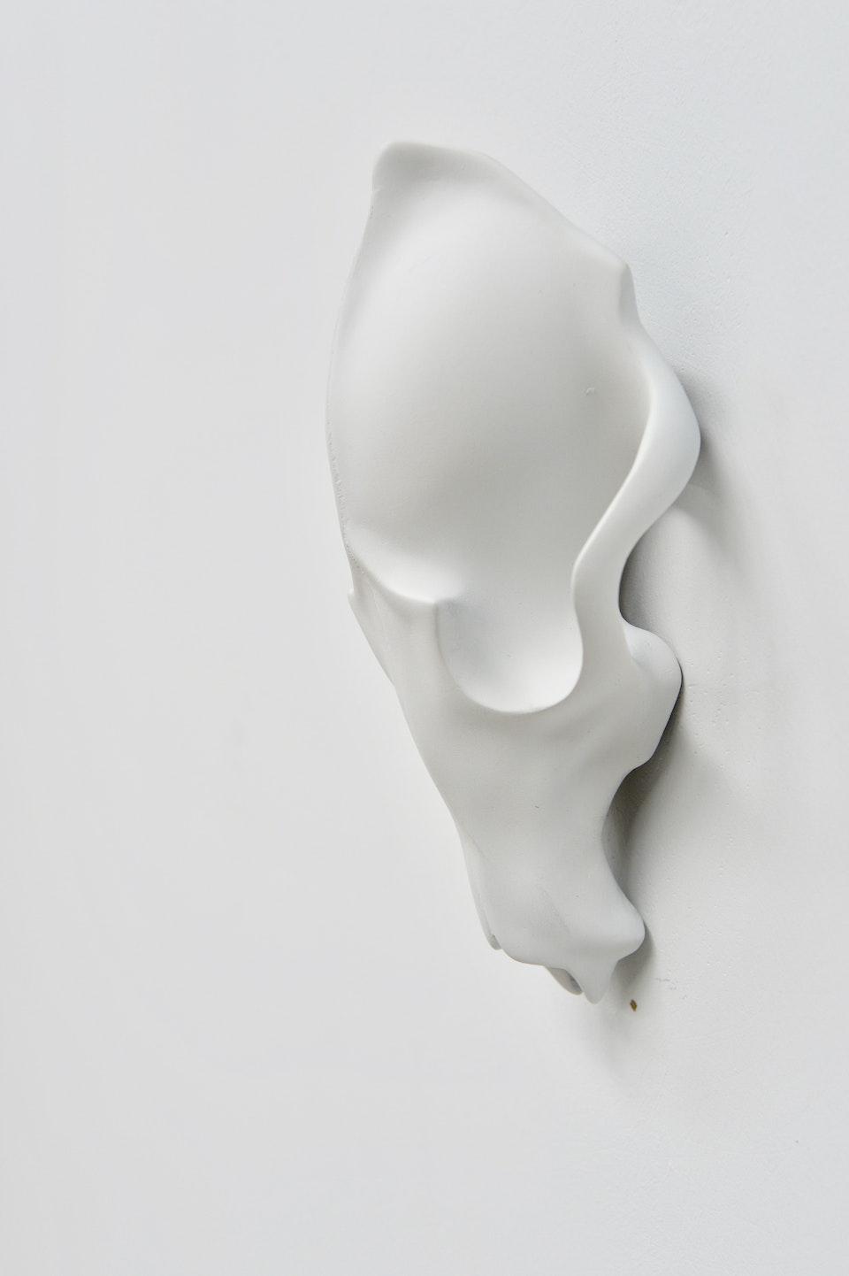 White Fox Skull E176F2C7-5ACD-4993-90D4-D39F0E09026E