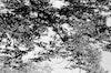 Prints - Reflection - photo rag - 50x70 2200 SEK