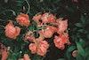 Prints - Flowers - photo rag - 50x70 2200 SEK