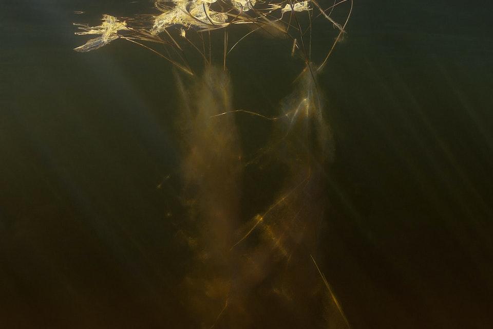 Water - Väsen / Creature     104x170cm