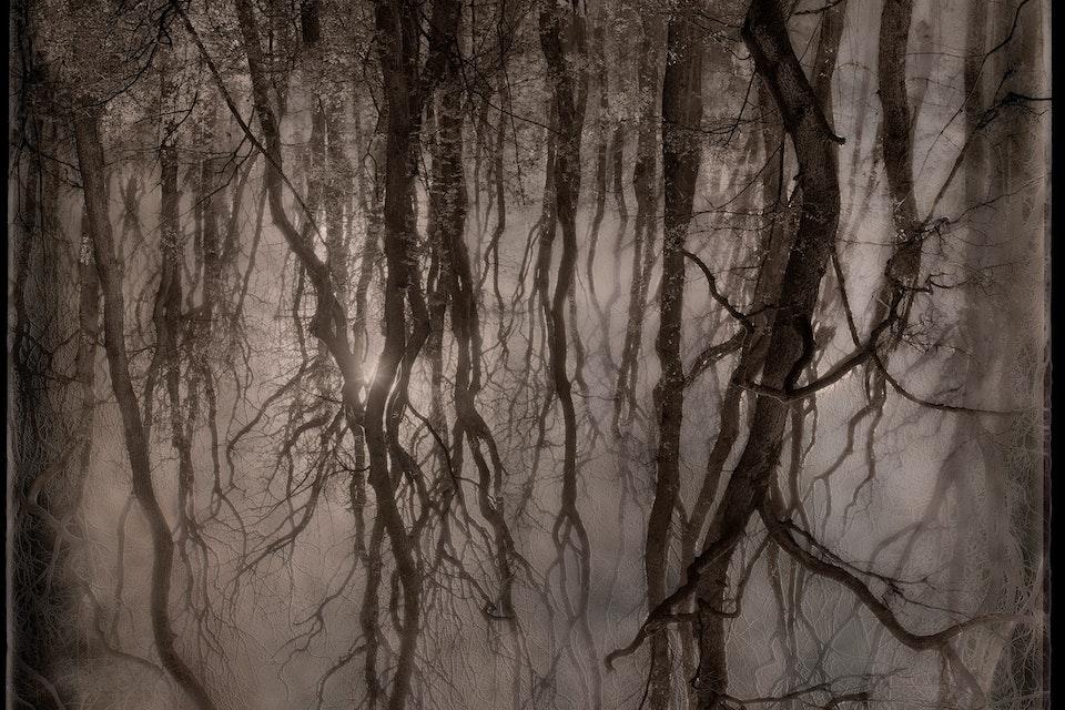Landscapes - Rya skog / Rya forest            80x100 cm