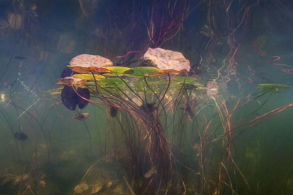 Water - Höstbloss / Autumn flare              80x158cm