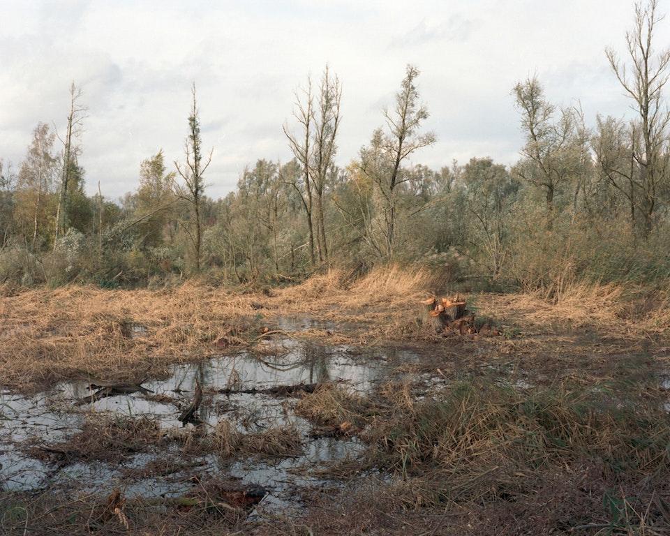 Hors temps - Paysage hollandais - De Biesbosch, 2012 (81x65cm)