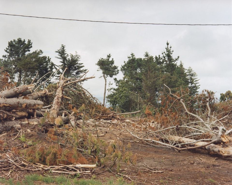 Anthropocène - Arbres, Finistère, 2014 (65x81cm)