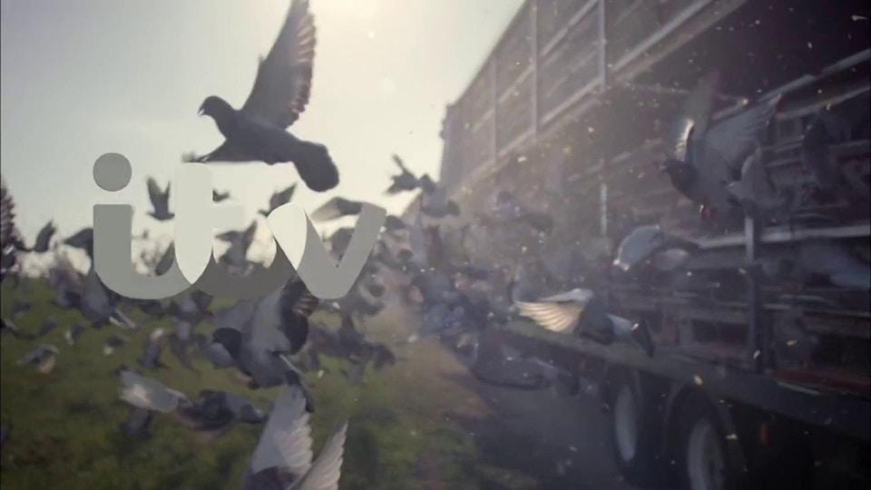 ITV Ident Pigeon Racing