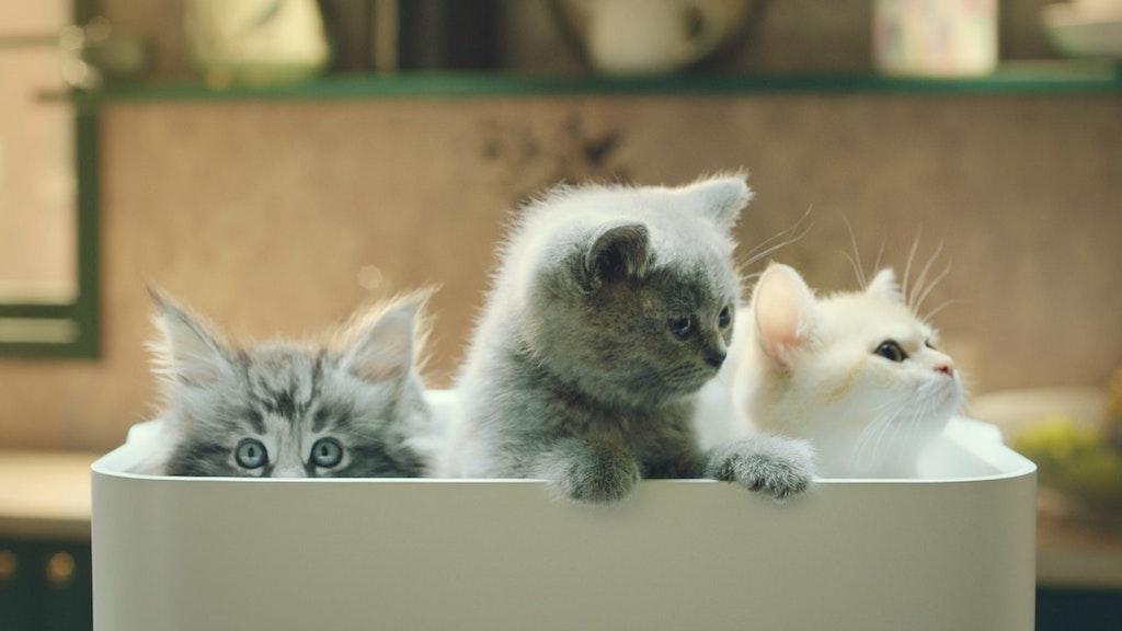 Midea Dehumidifire - Little Kittens
