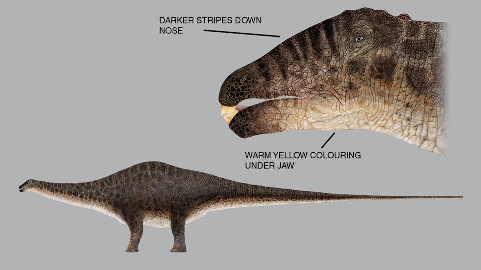 Apatasaurus dinosaur skin concept