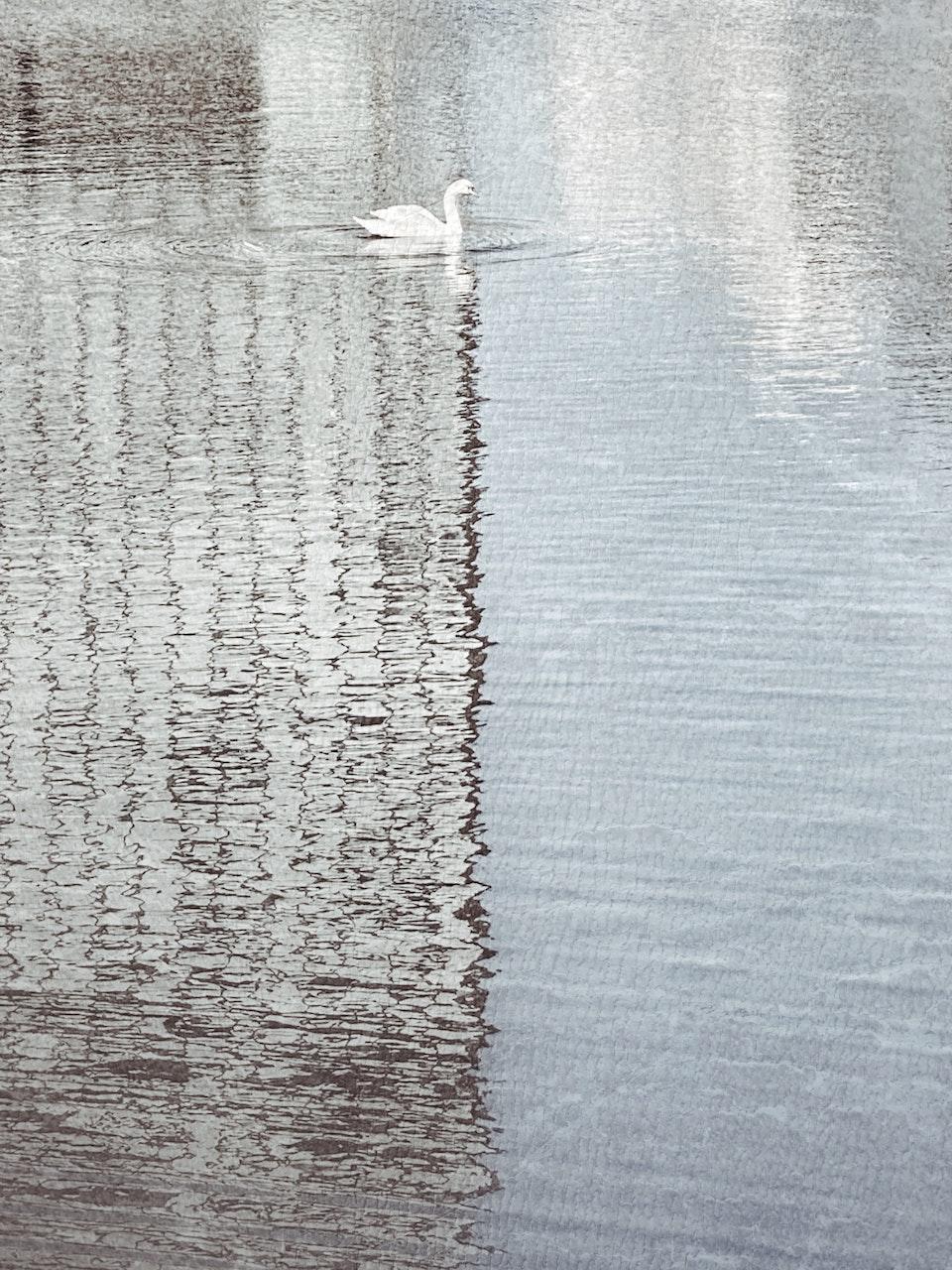 mYphone - Albert Dock Swan, Liverpool