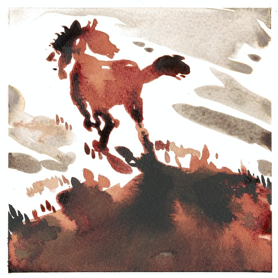 wild pastures - wild pastures #15