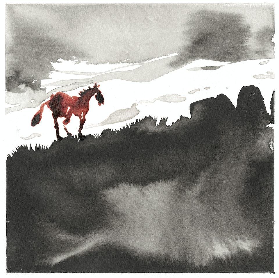wild pastures - wild pastures #13