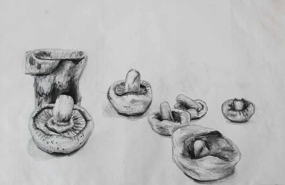 Nature - Clay Mushrooms - 2014 - Pencil on Paper - 30 x 42 cm A3