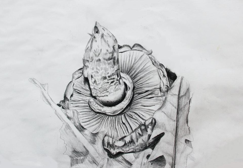 Nature - Mushroom - 2014 - Pencil on Paper - 30 x 42 cm A3