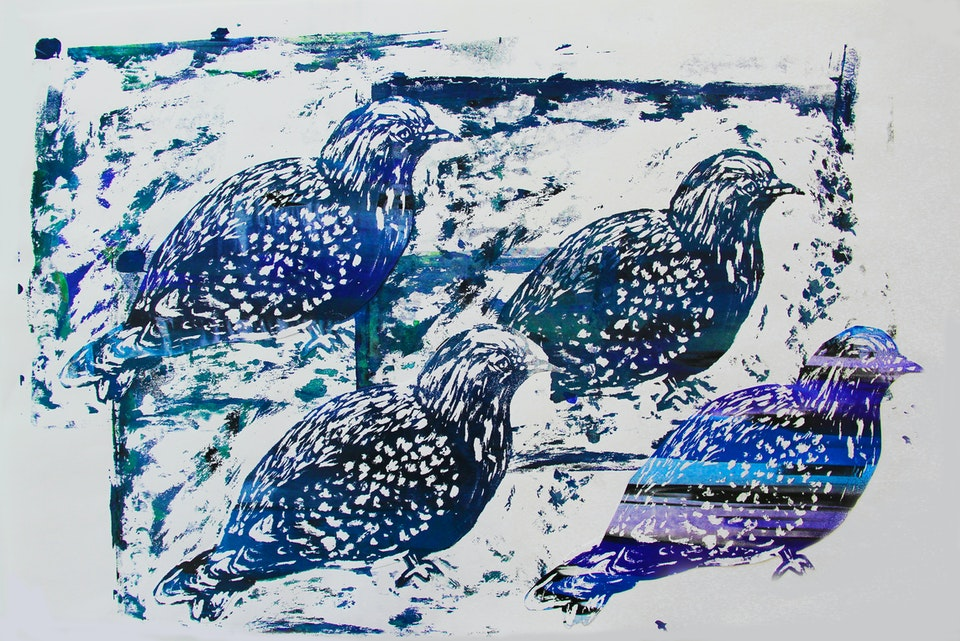 Nature - Pigeon - 2015 - Screen Print on Paper - 30 x 42 cm A3
