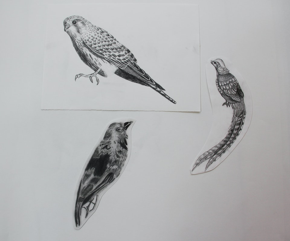 Nature - Birds - 2015 - Pencil on Paper - 30 x 42 cm A3
