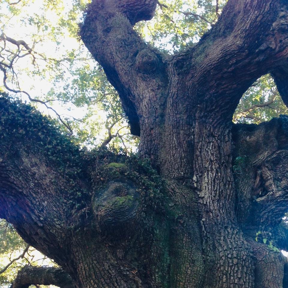 flora earth sea sky angel oak 2014