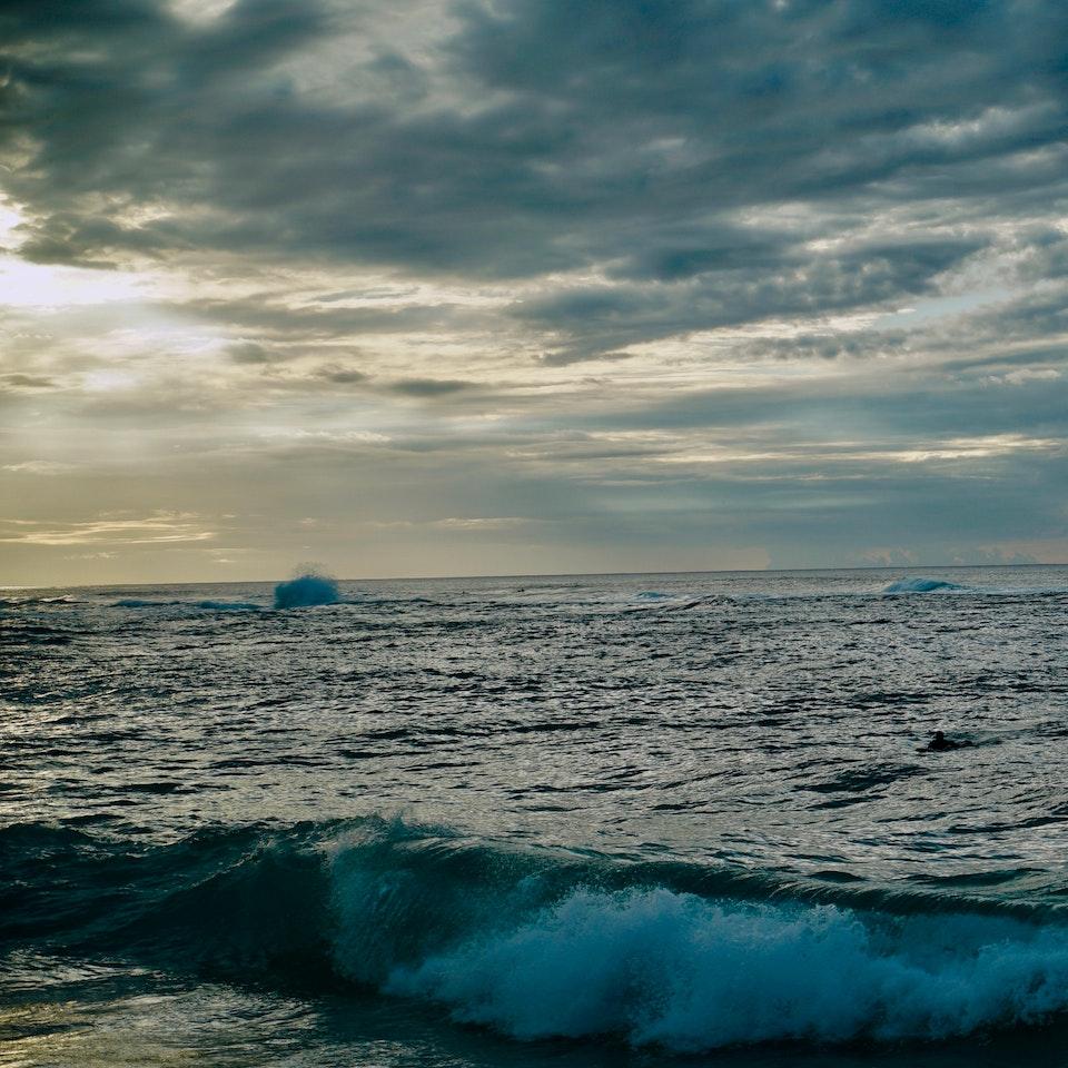 flora earth sea sky 2019-11-10 23.13.57-1