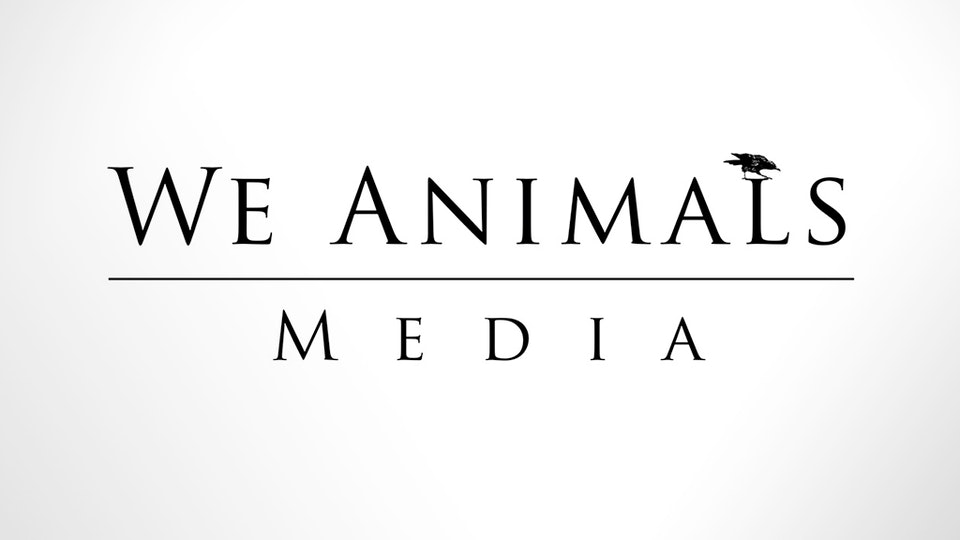 We Animals Media
