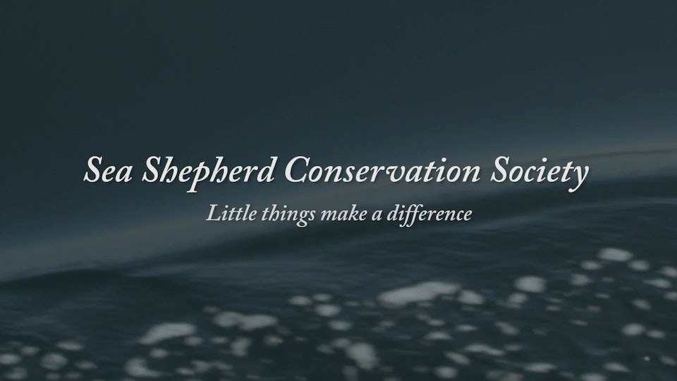 Little Things - SEA SHEPHERD CONSERVATION SOCIETY