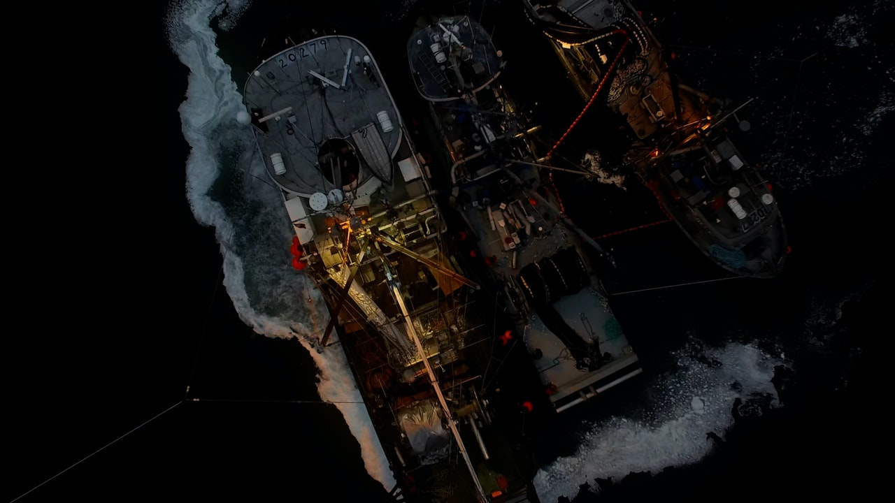 All We Have - SEA SHEPHERD CONSERVATION SOCIETY -